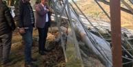 Alanya#039;da zarar gören seralarda hasar tespiti yapılıyor
