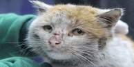 Depremzede kedi #039;Toros#039; Antalya#039;da sıcak yuvasına kovuştu