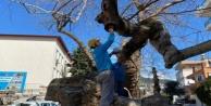 Alanya#039;da ağaçlara bakım çalışmaları başladı