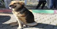 Alanyada engelli köpek 'Şirin öğrencilerin ilgi odağı oldu