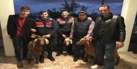 Alkol almak için keçi çaldılar! Alanya Cezaevini boyladılar
