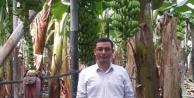Alanya#039;da muz üretiminde rekor artış