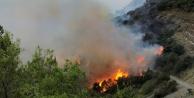 Muz bahçesinde çıkan yangın ormana sıçradı