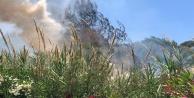 Alanyada çalılık yangını
