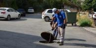 Alanya#039;da sinekle mücadeleye 180 kişilik ekip