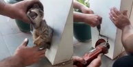 Demir kolona sıkışan kediyi esnaf kurtardı