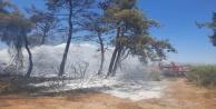 Manavgat#039;ta orman yangını