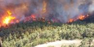Çanakkale#039;deki orman yangını yaşanan Yalova köyü tahliye ediliyor!