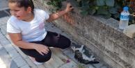 Yol kenarında can çekişen kediyi gören çocuk gözyaşlarına boğuldu!