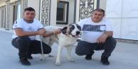 Alanyalı işletmeciye yolda bulup tedavi ettirdiği sokak köpeği sebebiyle haciz geldi!