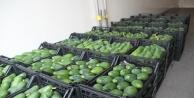 Alanya#039;dan Bulgaristana 3 ton avokado ihracatı
