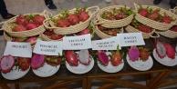 Ejder meyvesine dış pazardan yoğun talep