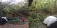 Kampçıların üzerine ağaç devrildi: 1#039;i ağır 4 yaralı
