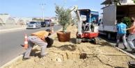 Alanya Belediyesi#039;nden bitkilendirme çalışması