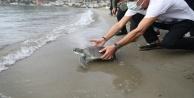 Alanya#039;da tedavisi tamamlanan yeşil deniz kaplumbağası denize bırakıldı