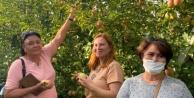 Alanyalı Ruslar Elma Hasat Turu#039;na katıldı
