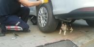 Anne kedi yavrusu kurtarılırken bir an olsun başından ayrılmadı