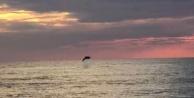 Alanya#039;da turistlerin çekildiği sahiller yunuslara kaldı