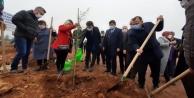 AK Parti#039;den İsmail Kökçe adına hatıra ormanı