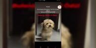 Alanya#039;da büyük ödül! Bu köpeği buluna 10 bin TL