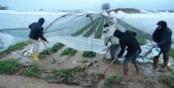 Antalyada fırtına ve yağmur çilek seralarını vurdu