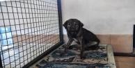Barınakta kedi ve köpeklere ısıtıcılı koruma