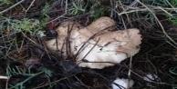 Mantar toplarken kaybolan kadını jandarma buldu