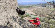 Uçurum kenarında mahsur kalan keçileri jandarma kurtardı