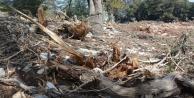 Antalya#039;da hazine ve sarı alan arazilerindeki ağaç katliamına tepki