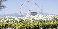 Antalyada açan 161 bin lale ve sümbül görenleri hayran bırakıyor