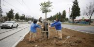 3. Etap Raylı Sistem güzergahı ağaçlandırılıyor