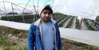 Antalyada şiddetli rüzgar çilek seralarının naylonlarını uçurdu