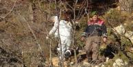 Ağaca asılı çürümüş erkek cesedi bulundu