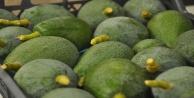 Avakado fiyatları rekora koşuyor