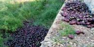Musluoğlu: Patlıcanlar çöpe gidiyor