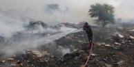 Çöp yangını palmiye ağaçlarını kül etti