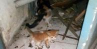 Depoda 3 gündür mahsur kalan yavru kediyi itfaiye kurtardı