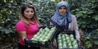 Avokadoda Alanya'nın 15 milyon adet üretim hedefi
