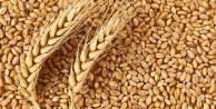 Antalya'da buğday alım fiyatını açıkladı