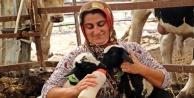 Anneleri doğumda ölen ikiz kuzulara 'özel anne' şefkati