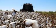 Çiftçiye 72 milyon pamuk ödemesi yapıldı