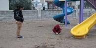 Çocuk parkında dehşete düşüren hayvana işkence kalıntıları