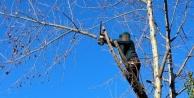 Alanya'da ağacı budarken düşen genç  yaralandı