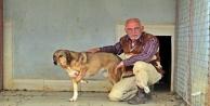 Köpek oteli açtı, sokak hayvanlarından müşterilerine yer kalmadı