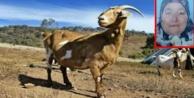 Otlattığı keçi katili oldu!