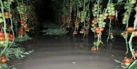 Su altında kalan seralarda sezon erken bitti
