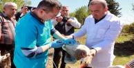 Kanatlı hayvanlara 300 bin doz aşı uygulanacak