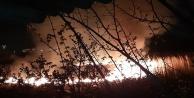 Sazlık yangını korkuttu!