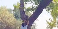 Ağaçtan indirilen kediler yine aynı ağaca çıktılar