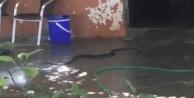 Evden çıkan 2 metrelik yılan paniğe sebep oldu